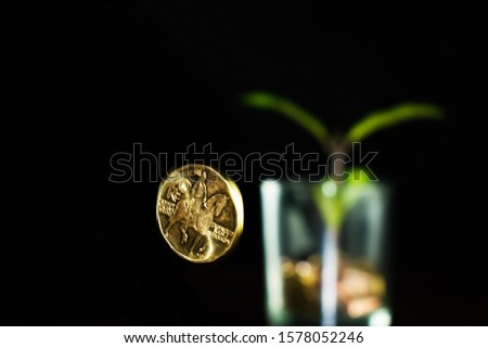 A green plant grows from a pot of coins. A coin in twenty Czech korunas falls on the table. Green plant grows from a pot of coins. Growing business investment. #1578052246