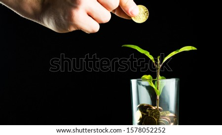 Green plant grows from a pot of coins. Growing business investment. Money tree grew by two centimeters. #1578052252