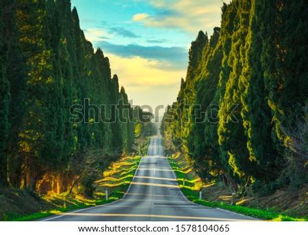 Bolgheri famous cypresses trees straight boulevard landscape. Maremma landmark, Tuscany, Italy, Europe. #1578104065
