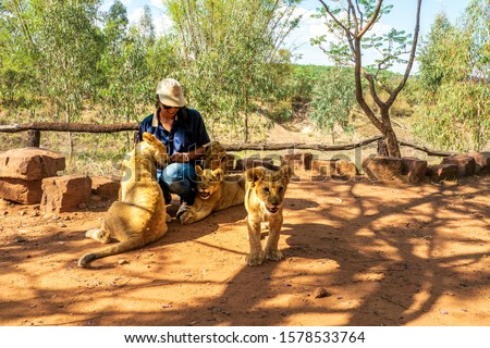 African woman crouching on the ground and playing with 4 month old lion cubs (Panthera leo), Colin's Horseback Africa Lodge, Cullinan, South Africa #1578533764