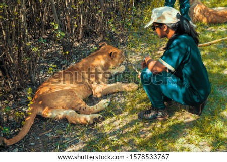 African woman sitting on the ground and playing with 8 month old junior lions (Panthera leo), Colin's Horseback Africa Lodge, Cullinan, South Africa #1578533767