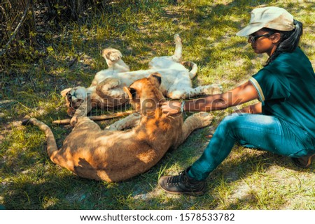 African woman sitting on the ground and playing with 8 month old junior lions (Panthera leo), Colin's Horseback Africa Lodge, Cullinan, South Africa #1578533782