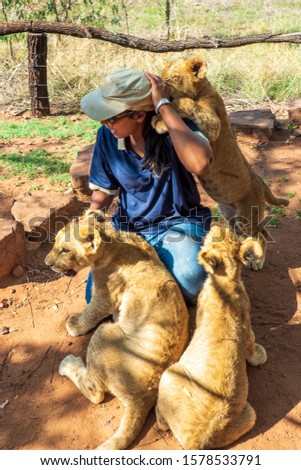 African woman crouching on the ground and playing with 4 month old lion cubs (Panthera leo), Colin's Horseback Africa Lodge, Cullinan, South Africa #1578533791
