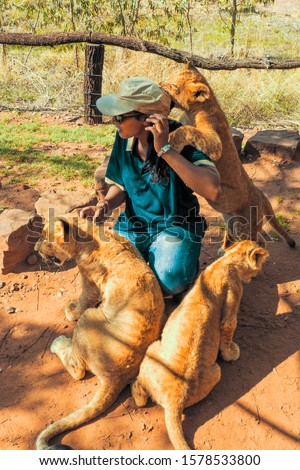 African woman crouching on the ground and playing with 4 month old lion cubs (Panthera leo), Colin's Horseback Africa Lodge, Cullinan, South Africa #1578533800