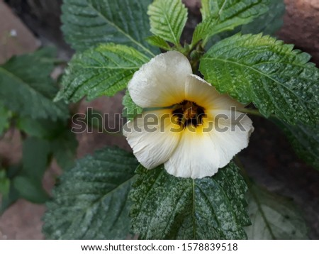 white flower in the garden is very beautiful and fragrant. #1578839518