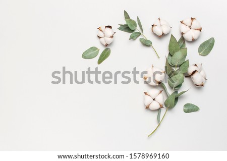 Flat lay flowers composition. Cotton flowers and fresh eucalyptus twigs on light gray background. Top view, copy space. Delicate white cotton flowers. Floral background, greeting card #1578969160