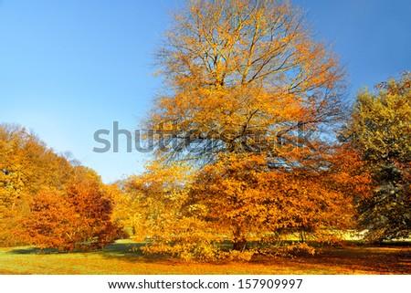 Autumn Landscape. Park in Autumn.   #157909997