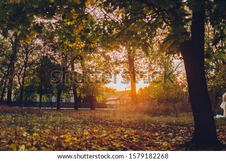 Autumn Tree and Sun during Sunset. Golden sunset in bokeh background. Golden autumn leaf illuminated by a low bright autumnal sun from behind, amongst other red and brown fall leaves on the ground #1579182268