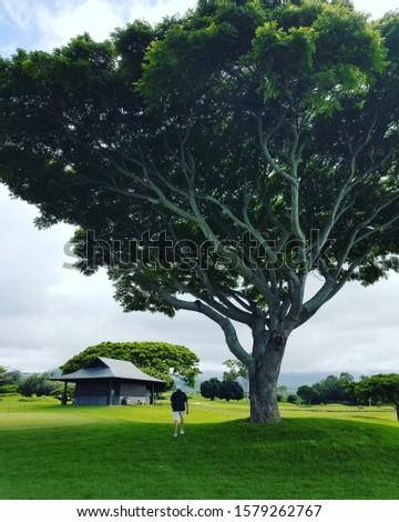 One Tree, one man ,one mullion dollar bathroom, Kona Hawaii! #1579262767