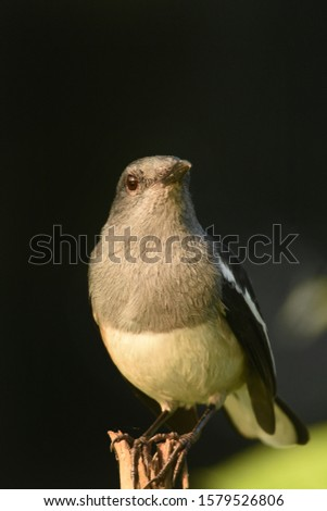 Every country has unique emblems which range anthem, uniform, tree, Flower, animal and a flag alongside this country also have a national bird to represent its gardens, trade and forest habitation. #1579526806