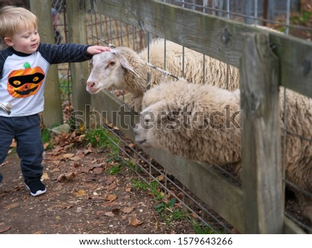Glastonbury, CT USA. Oct 2019. Sheep getting a good petting from a little boy. #1579643266