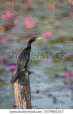 Blurred Image of the Black Cormorant bird standing on the post, seeking for fish or food.  Blurred picture by rotating lens with a wide F value technics.