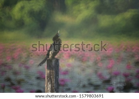 Blurred Image of the Black Cormorant bird standing on the post, seeking for fish or food.  Blurred picture by rotating lens with a wide F value technics.It is intended to shoot to blur.