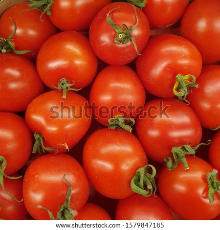 Macro photo red tomato. Stock photo red fresh vegetable tomatoes.  #1579847185