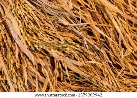 Grains of rice and rice grains on natural background. #1579909942