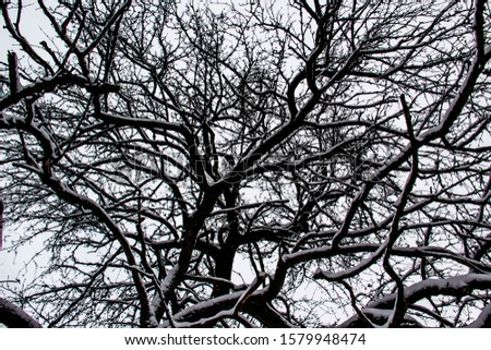 A black tree branches in the snow against the sky. Curved tree branches. White background. Branches on the snow. Amazing and Terrible.