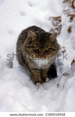 fluffy cat in fluffy white snow #1580018968