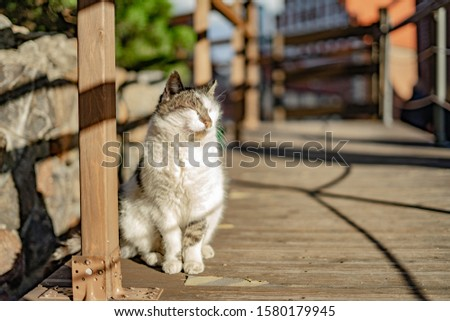 beautiful cute cat  taking sun bath at street of old town