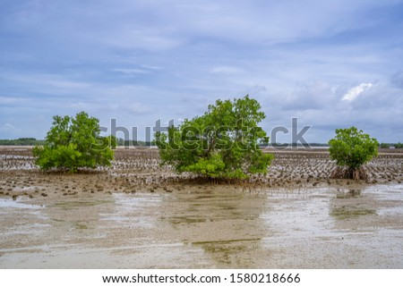 Mangrove trees that grow in the mangrove forest will help to slow down the erosion of the natural erosion of the sea. #1580218666