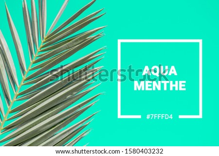 Lava lush, aqua mente and phantom blu palm tree leaves on a sunny day #1580403232