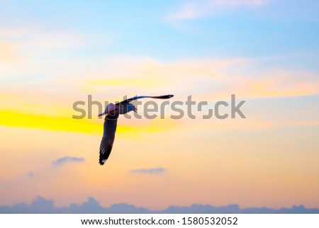 Seagull Bird flying freedom on beautiful colorful sky background with the sun, Freedom concept
