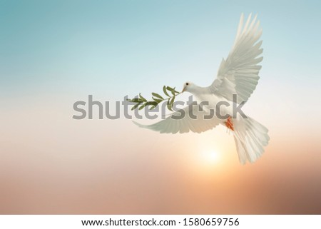 white dove or white pigeon carrying olive leaf branch on pastel background and clipping path and international day of peace  Royalty-Free Stock Photo #1580659756