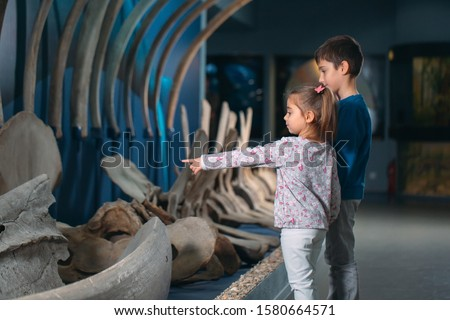 Children look at the skeleton of an ancient whale in the Museum of paleontology Royalty-Free Stock Photo #1580664571