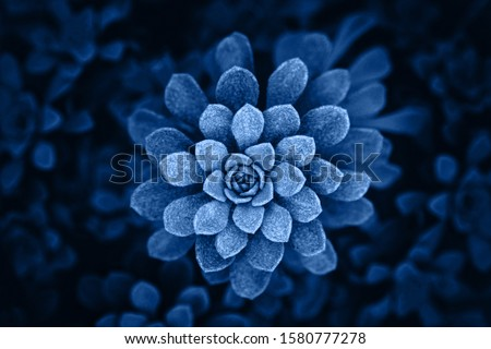 Classic blue Pantone 2020 year colored flower plant upper view.