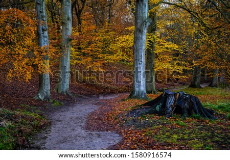 Autumn forest trail landscape. Autumn forest trail view. Trail in autumn forest. Forest trail in autumn forest Royalty-Free Stock Photo #1580916574