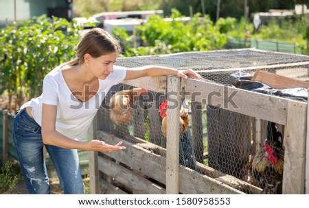 Farmer woman feeding chikens in a hen house #1580958553