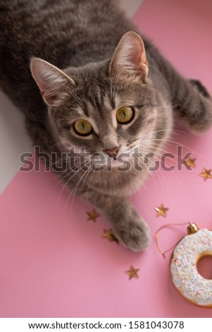 gray paw cat touches Christmas toys on a pink background. Cat and christmas. We decorate the Christmas tree