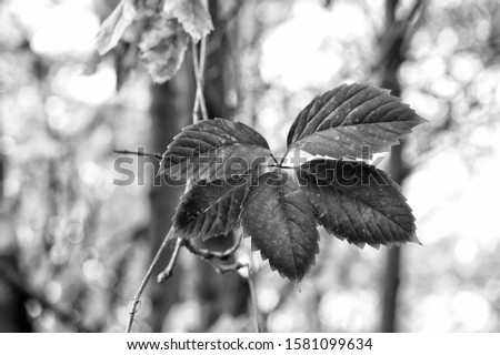 Brightly colored autumn foliage. Fall foliage on natural background. Red pigment foliage on autumn landscape. Leaves change color. Deciduous tree foliage in fall. #1581099634