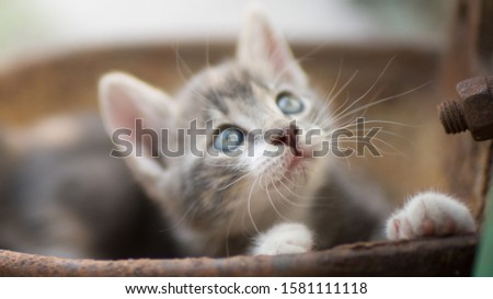 Portrait of a cute little kitty outdoors, domestic lovely cat, charming playfull baby animal, cat plays in a rusty bowl #1581111118
