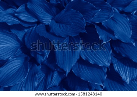Beautiful natural dark background with exotic leaves in blue trendy color. Trendy color concept of the year, classic blue background. 2020 trend - classic blue, side top view, layout for design. #1581248140