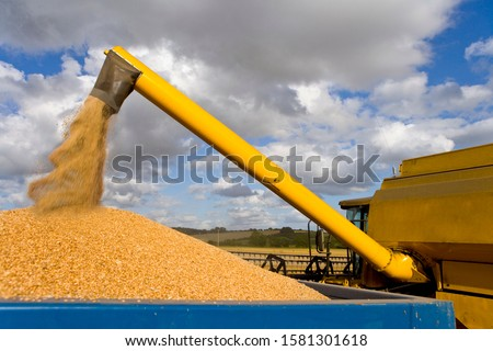 Combine harvester emptying harvested wheat grain into tractor trailer #1581301618