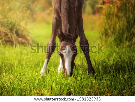 Beautiful horse action portrait in field