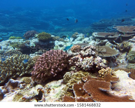 Beautiful corals at the bottom of the ocean in America  #1581468832