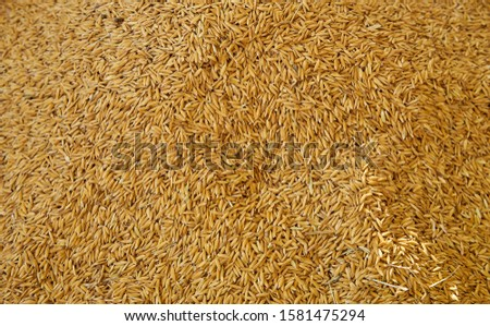 A close up view of rice grains.         #1581475294