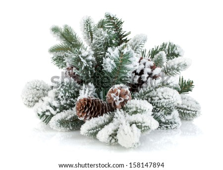 Fir tree branch with cones covered with snow. Isolated on white background #158147894