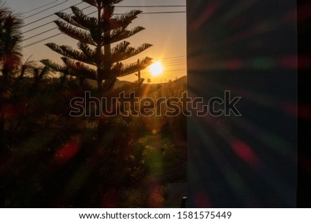 The tree obstructed the light from the sunrise in the morning. #1581575449