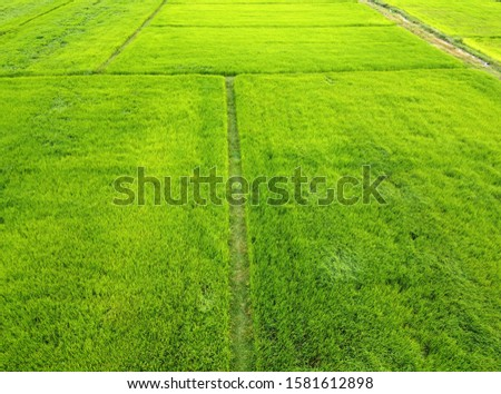 Aerial view of green rice fields,bird's eye view #1581612898