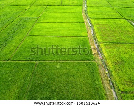Aerial view of green rice fields,bird's eye view #1581613624