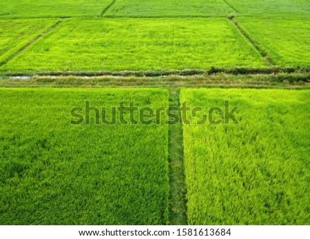 Aerial view of green rice fields,bird's eye view #1581613684