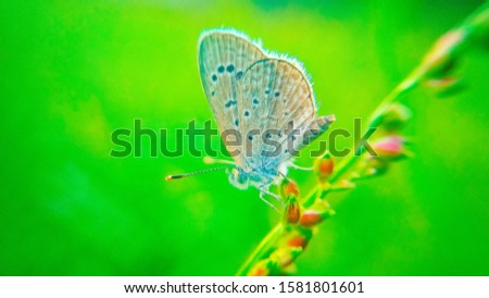 Wild flowers and butterfly in a meadow in nature. the rays of sunlight in summer in the butterfly close-up of a macro. A pictures colorful artistic image with butterfly.