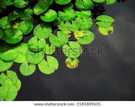 Water lilies floating in black water. #1581809635