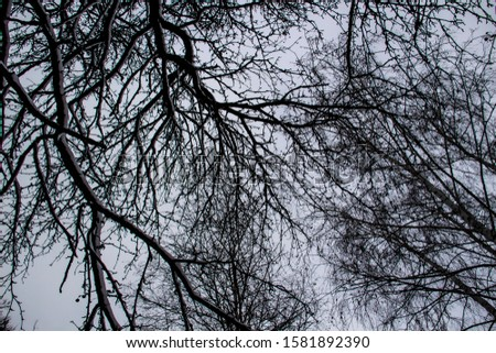 The tree branches against a sky. Looking up at the pattern of bare branches.   #1581892390