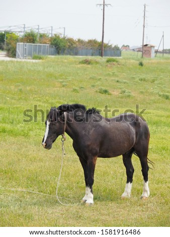 a black male horse resting on the field #1581916486