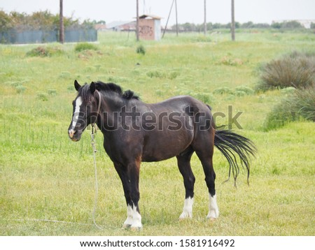 a black male horse resting on the field #1581916492
