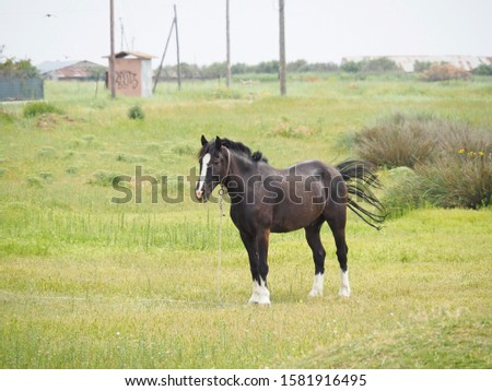 a black male horse resting on the field #1581916495