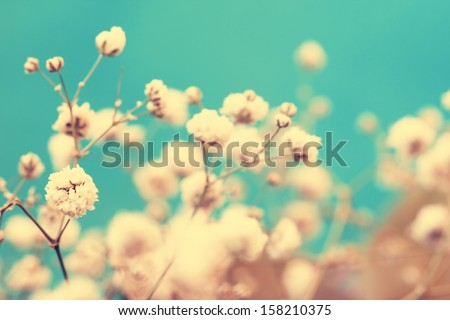 vintage lovely small white flower buds close up #158210375
